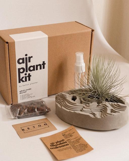béton planter Air Plant Kit in Collina Planter - Andreana 1