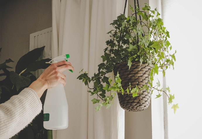 Choose a Low-Maintenance Indoor Hanging Plant