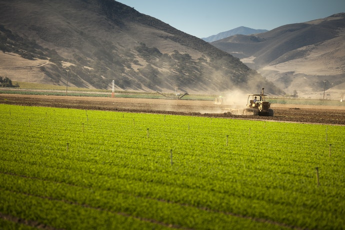 Rock Phosphate Helps Plants to Grow Steadily