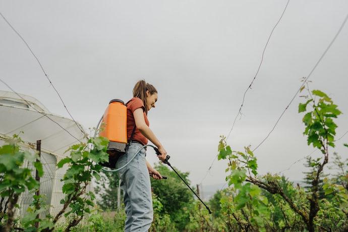 Decide Between Dry or Liquid Organic Fertilizers