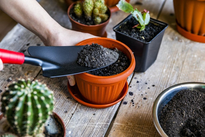 Get the Correct Potting Medium