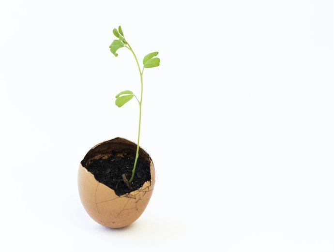 Why Go for Organic Fertilizers?