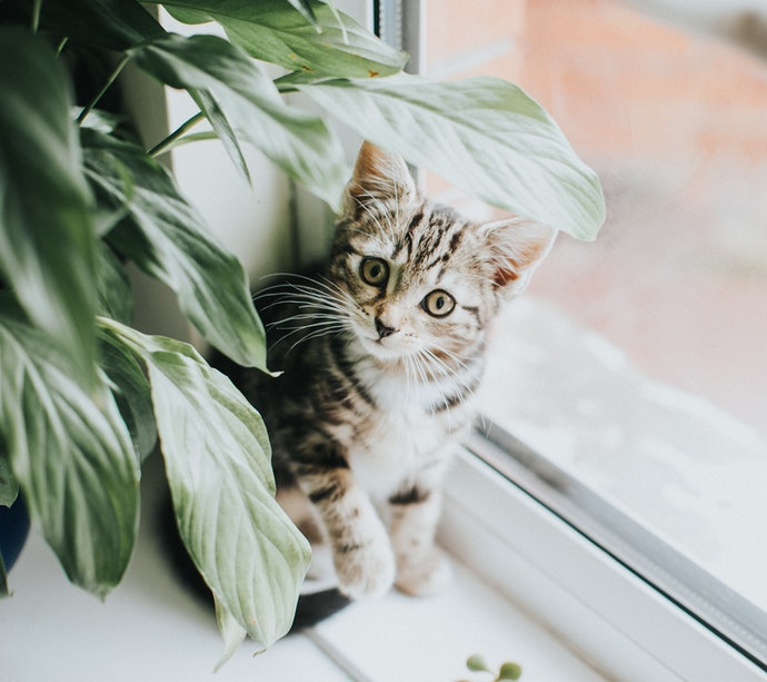 If You Have a Pet, Choose a Non-Toxic Plant Species