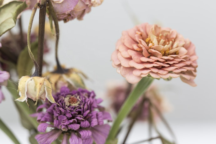 Consider Longevity - Avoid Flowers With Dark Ends and Brown Spots