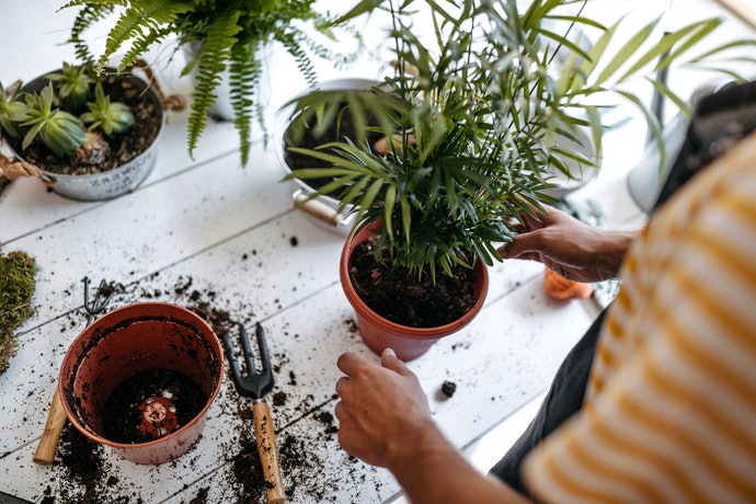 A Complete Guide to Repotting a Plant