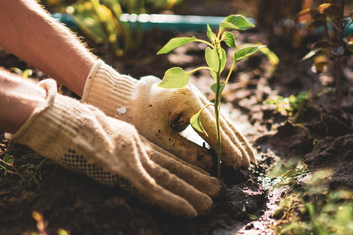 Planting in the Ground Gives Plants More Room to Grow