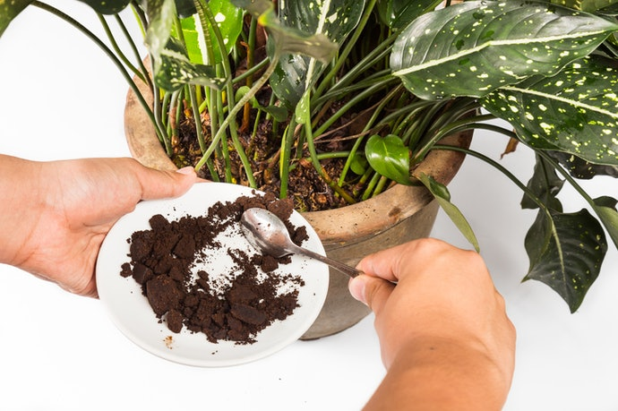 Coffee Grounds Will Keep You and Your Plants Alive and Awake