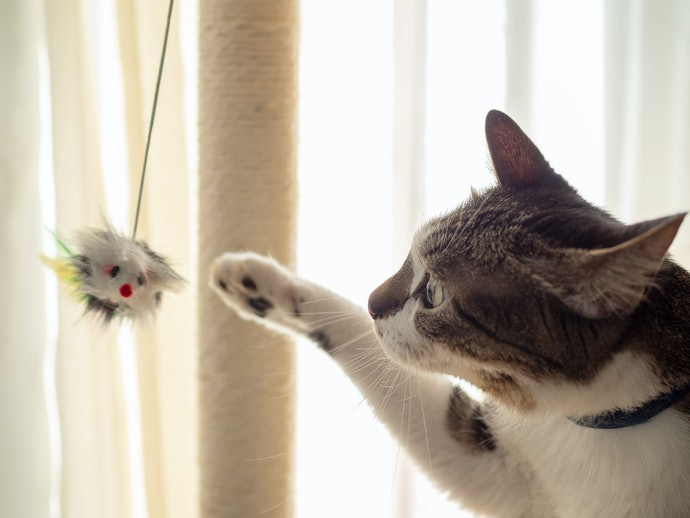 Have a Purr-fect Relationship With Your Fur Baby Through These Tips