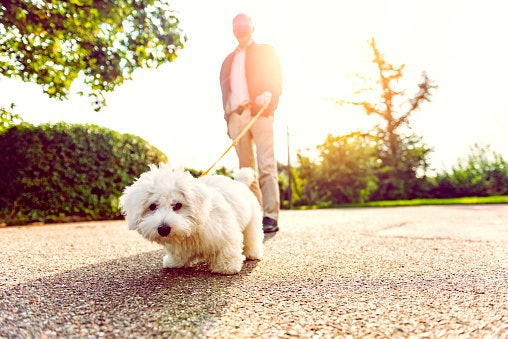 3. Walk Your Dog to Get More Steps Done