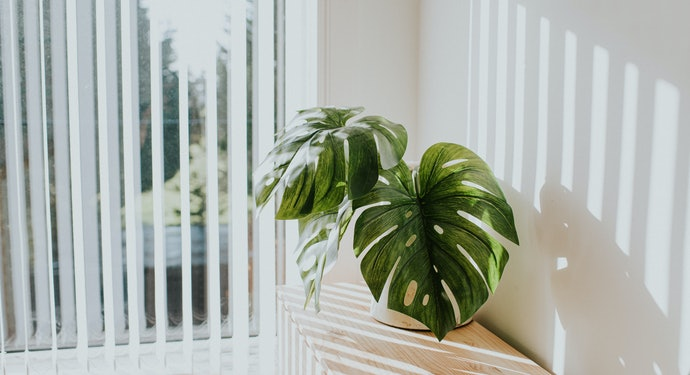 Having Four Hours of Light Is Best for Plants
