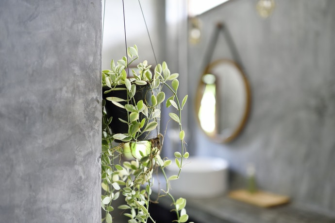 Select the Right Spot for Your Indoor Hanging Plant