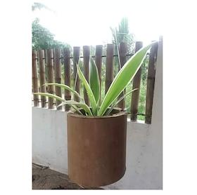 Top 10 Best Indoor Hanging Plants in the Philippines 2021 5