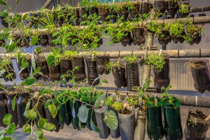 See How Much Space You Have and Need to Grow the Plants