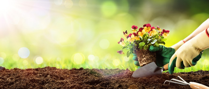 Use Organic Fertilizers for a Healthy Soil