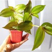 Top 10 Best Indoor Hanging Plants in the Philippines 2020