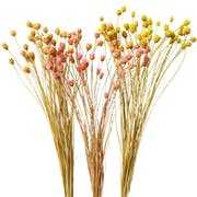 10 Best Dried Flowers in the Philippines 2021